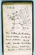 Darwin's_notebook